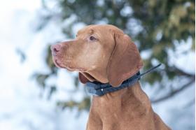 Tvoros funkcija - šuns padėties kontrolės akustinės ribos
