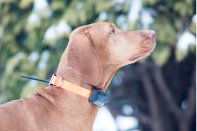 Garsinis signalas – šuns judesio aptikimas/sustojimas