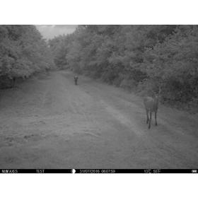 Medību - meža kamera NUM'AXES SL1008