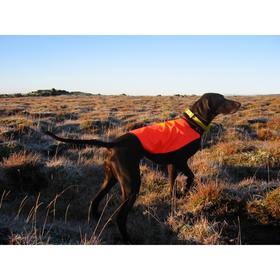 Jeigu Jūsų šuo niekada nedirbo su garso kontrolės antkakliu, pradėkite antkaklį naudoti stebėjimo režimu per pirmuosius du ar tris išėjimus.