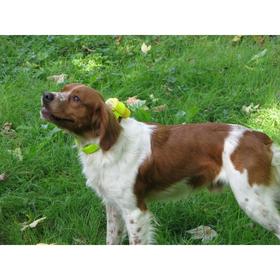 Šuo turi priprasti prie CANIBEEP RADIO PRO garsų, iš pradžių jie gali šunį trikdyti.