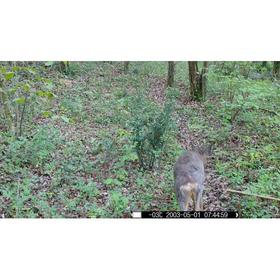 NUM'AXES SL1013 medžioklės kamera
