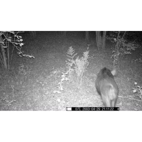 trail-camera-model-pie1013