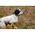 Принцип работы бипера состоит в определении двигается собака или нет.