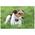 Rekomenduojamas naudoti uždarose patalpose, kur nėra kitų šunų
